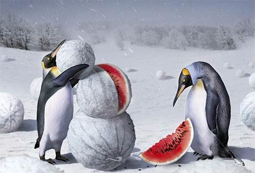 pingouin-scenario-gn.jpg