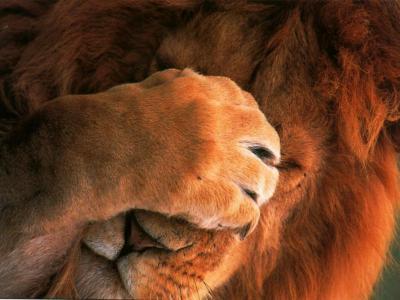 lion-decourage-GN.jpg