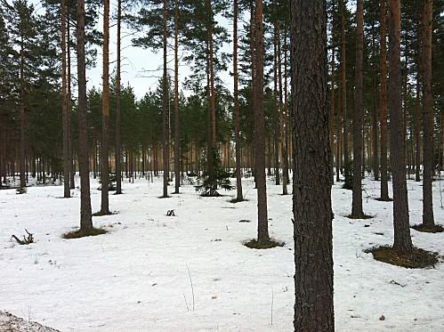 finland-larp-forest.JPG