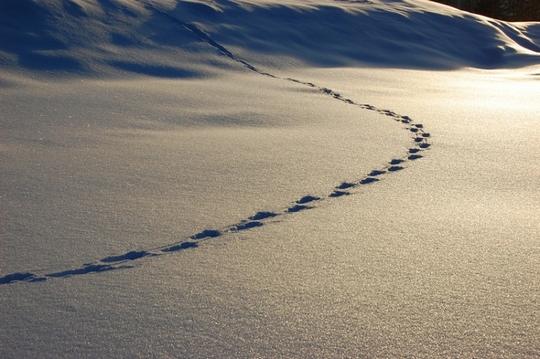 traces-scenario-grandeur-nature.jpg