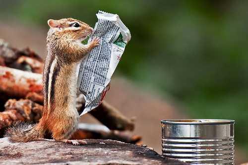 ecureuil-journal-grandeur-nature.jpg